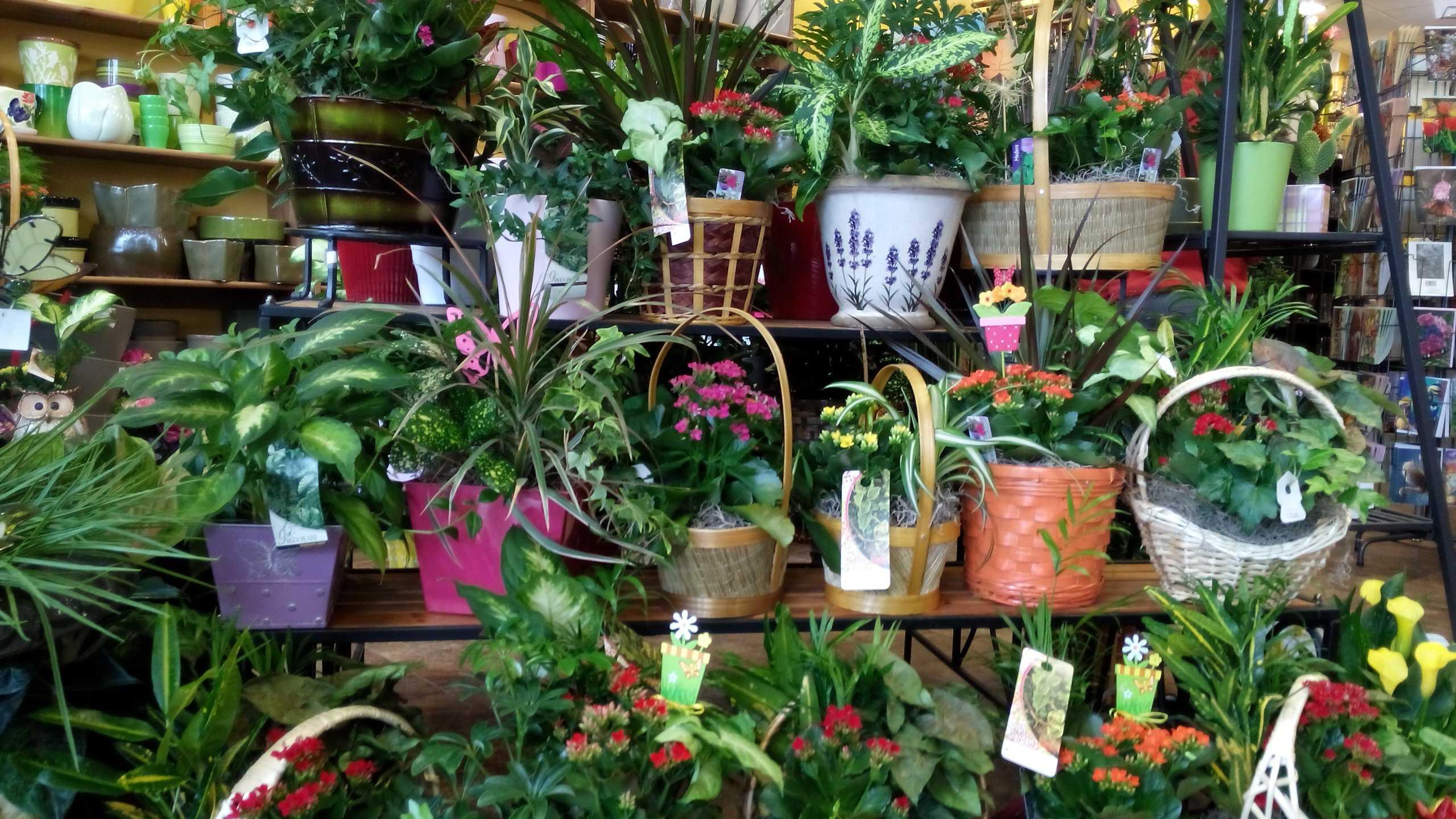 Fleuriste au jardin de sylvie for Au jardin de sylvie