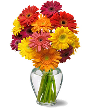 Bouquet de gerberas for Bouquet de fleurs gerbera